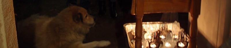 И пёс Барбос с нами