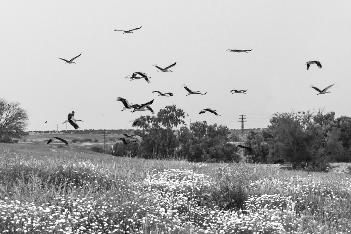 Полем, полем, полем белый аист пролетел