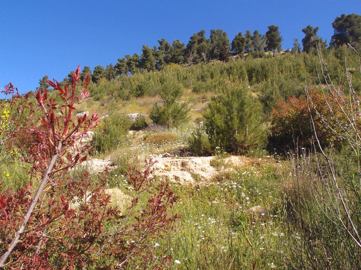 Красные холмы Иерусалима