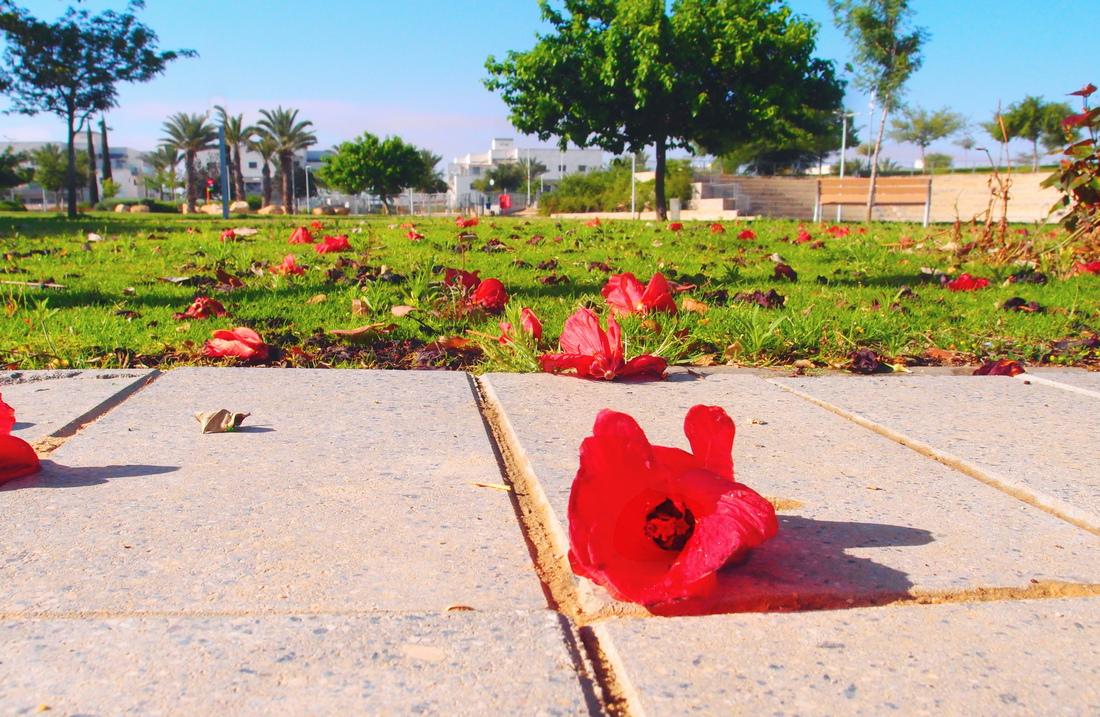 Дорога в школу усыпана цветами