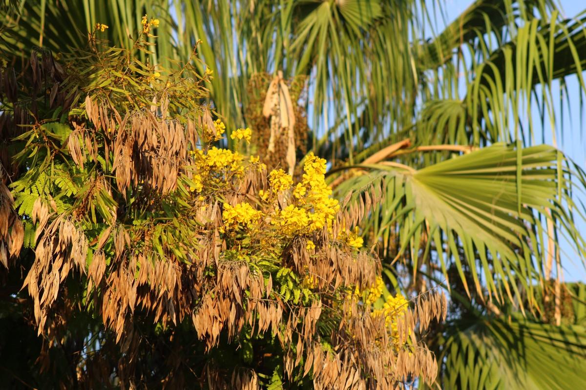 Синичка на пальме
