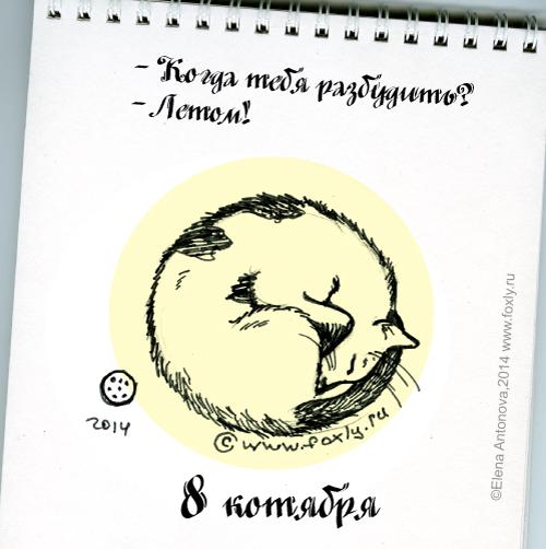8-котября
