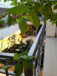 Зимний сад и кафе в клинике