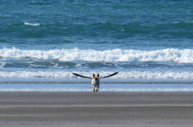 2699505-R3L8T8D-650-dogbird-perfect-timing