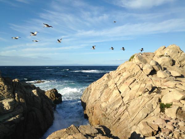 Monterey Pelicans