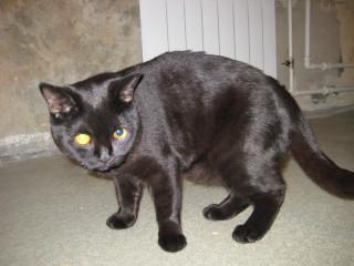 Кот живот большой но похудел