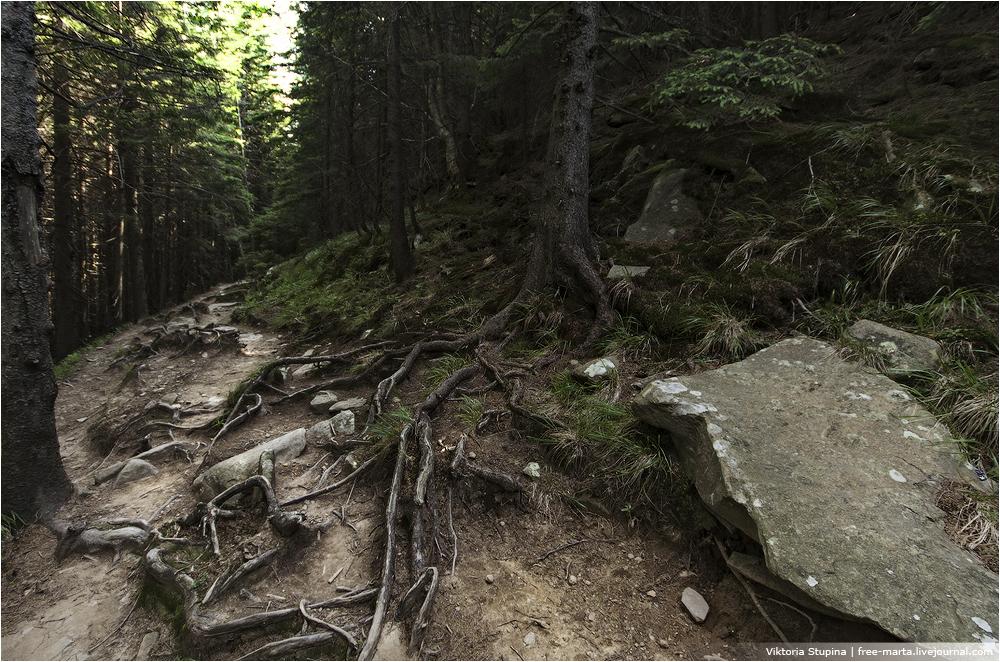 дземброня-карпаты