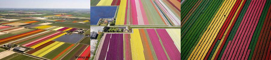 Поля в голландии
