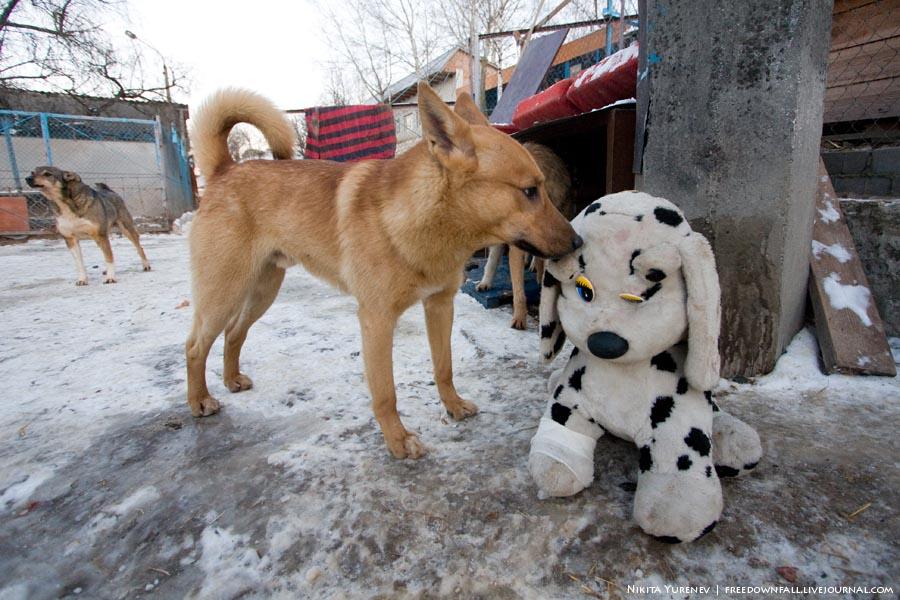 Собак это один из нескольких приютов