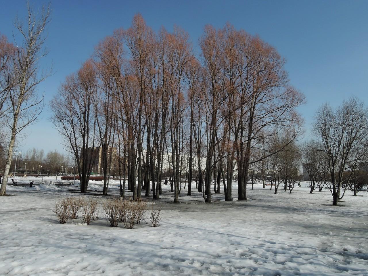 Весна. Гольяновский парк.