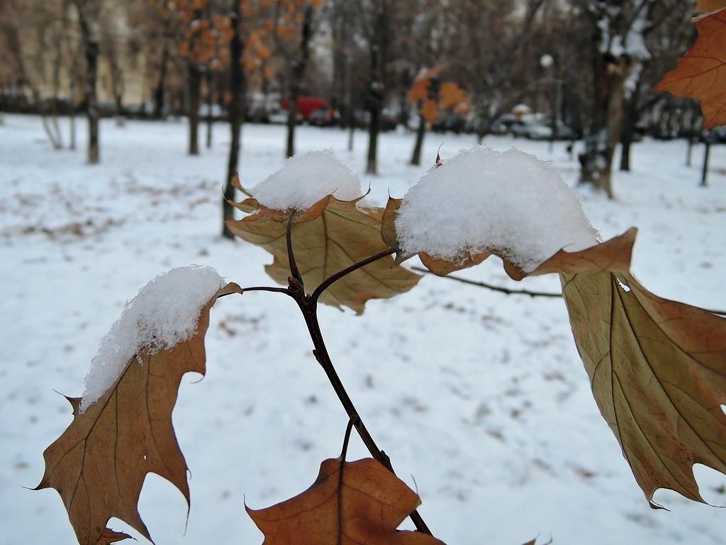 Листья, припорошенные снегом