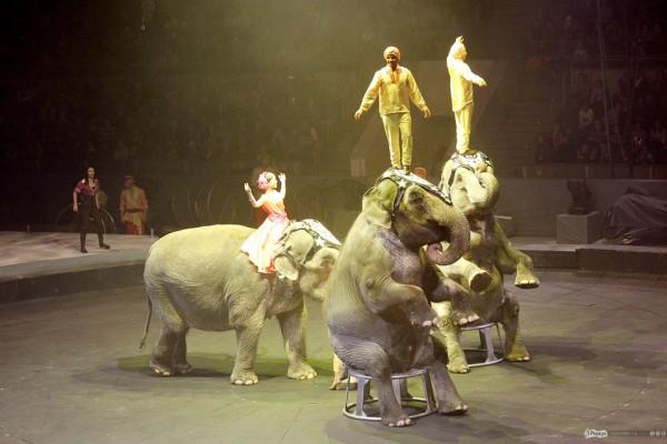 цирк запашных