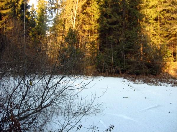 замерзший пруд