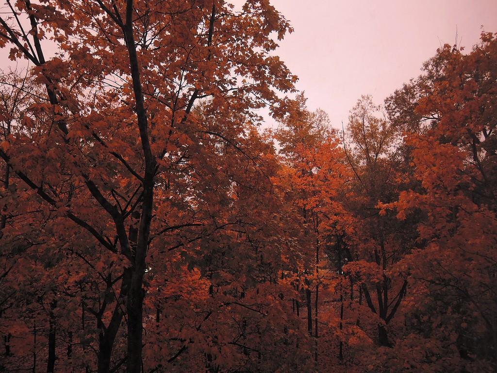 Дождь и красный закат