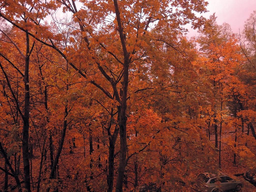 Красное небо, красные листья