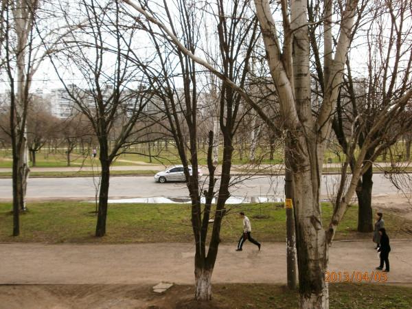 трава в парке