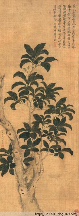 Цветы османтуса