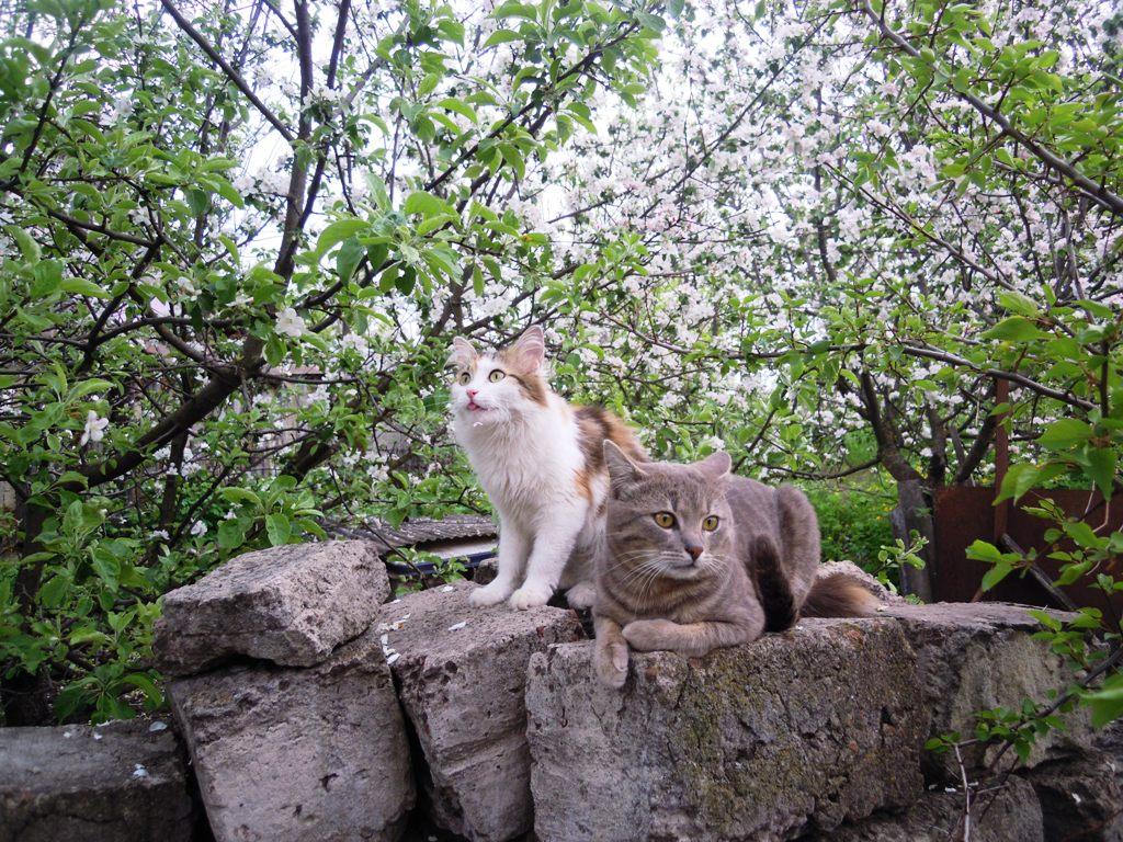 Сонька и Барсик