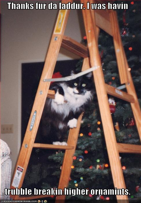thanks for the ladder.jpg