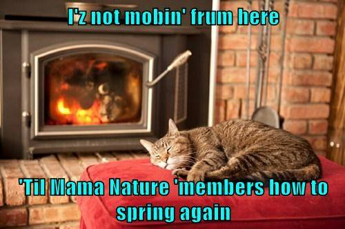 not moving til mother nature remembers how to spring.jpg
