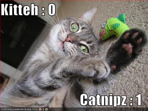 Catnip - 1.jpg