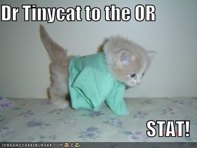 Dr Tinycat to the OR STAT.jpg