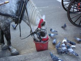 Тетя лошадь, дай овса немножко.