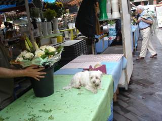 собака цветочницы