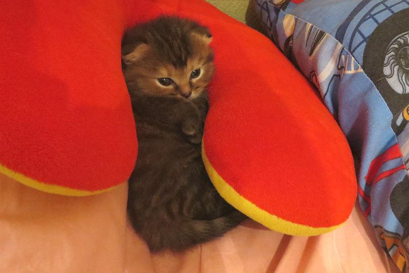 Постит кто одних котят!... :-)