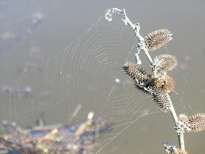 паутинка