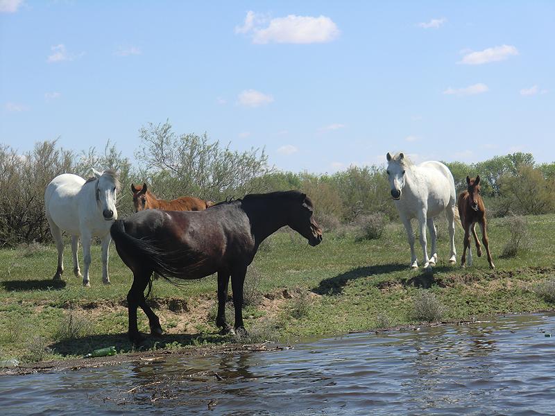 лошади у воды
