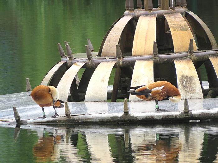 двое на фонтане