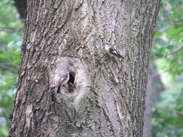 пара у гнезда