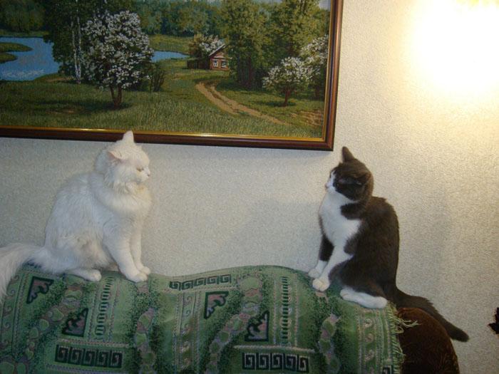 фаянсовые кошки