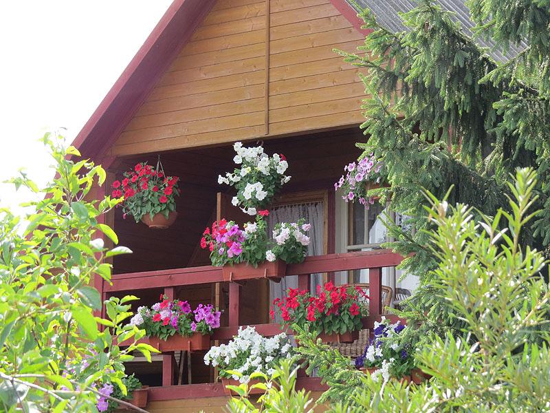 балкон в петуниях