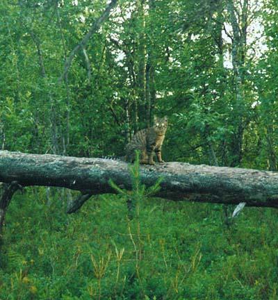 Мурзик на дереве