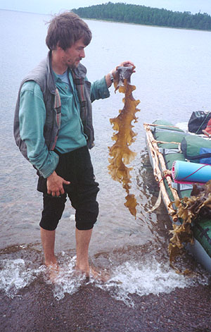 Дима в морской капустой