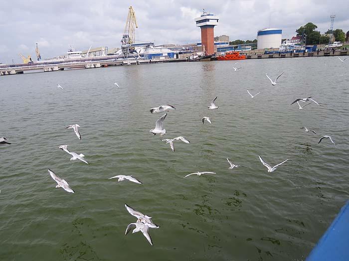 чайки над заливом