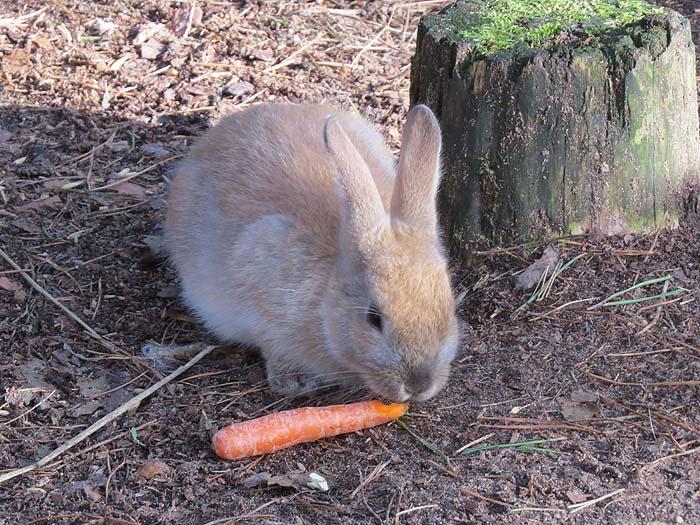 кролик и морковка
