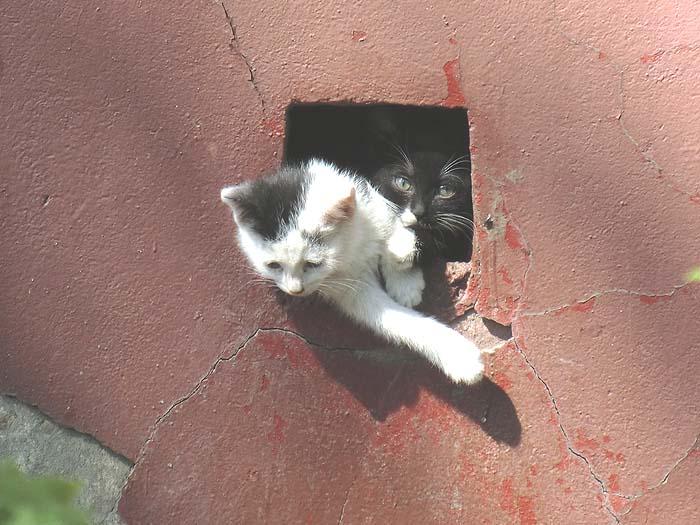 кошеня в подвале