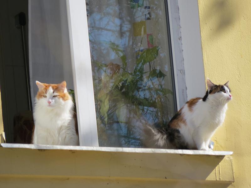 пазиловские коты