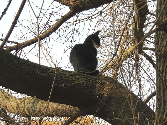 кот на дереве 2