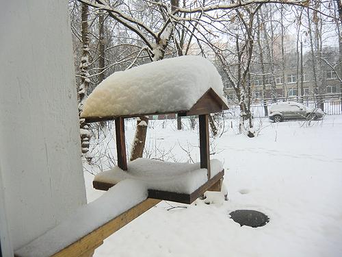 кормушка под снегом