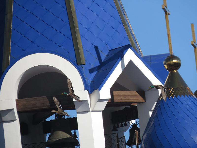кряквы над церковью