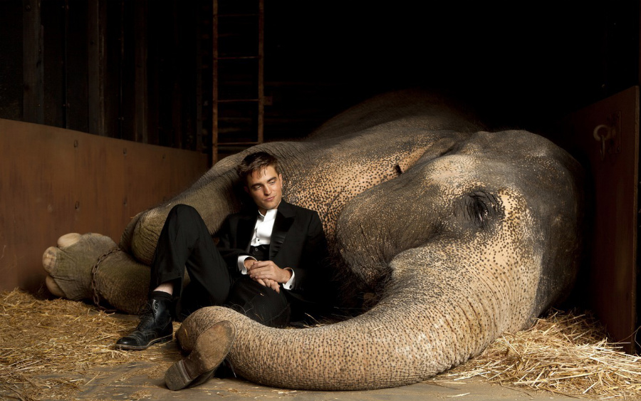 Хочу посмотреть на член слона 3 фотография