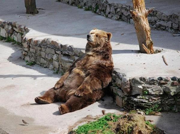 Медведь-сидит