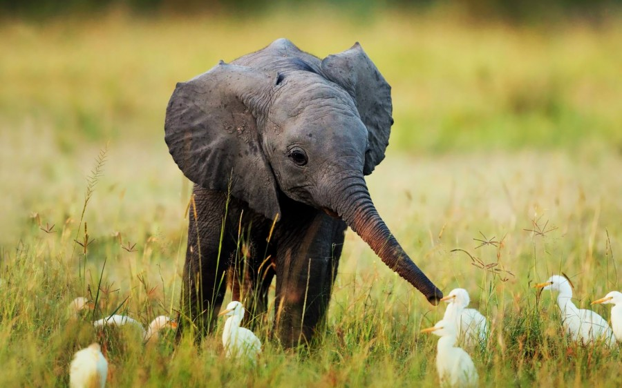 Слонёнок-и-утки