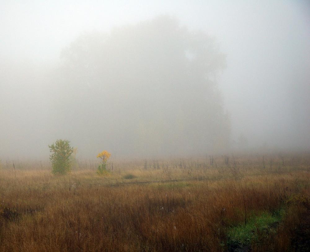 Туман1_1000