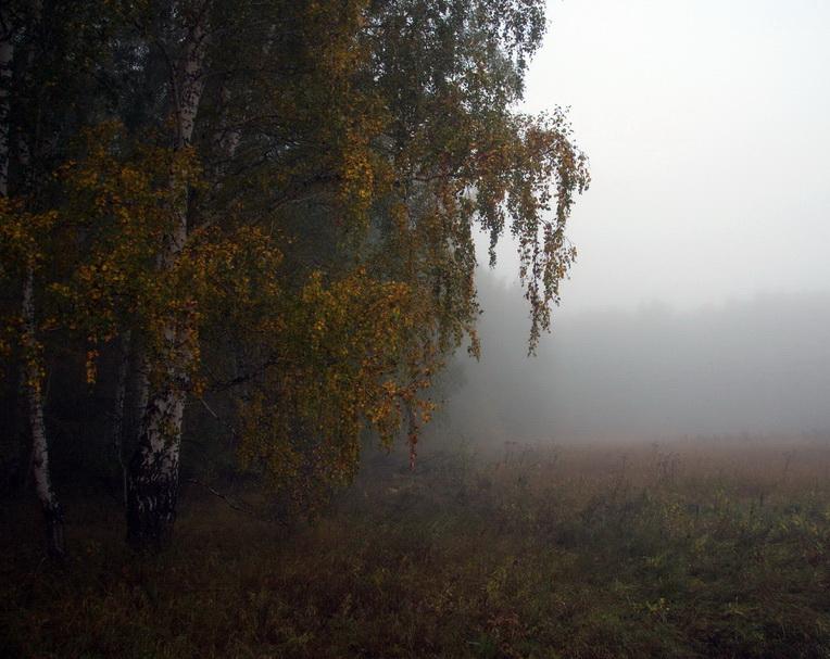 Туман2_1000