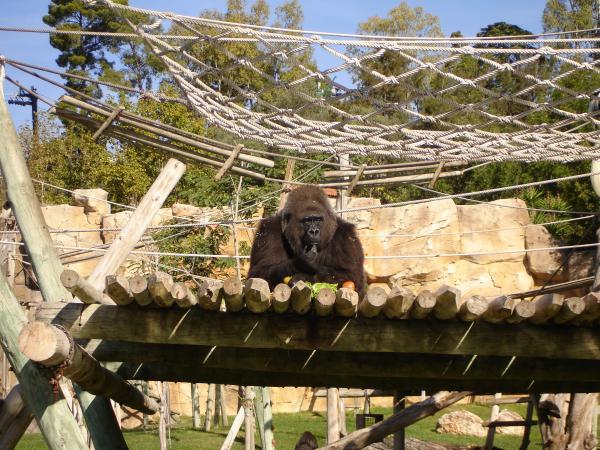 Зоопарк в лиссвбоне отзывы